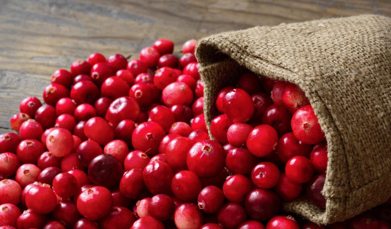 cranberrieshealth-benifits