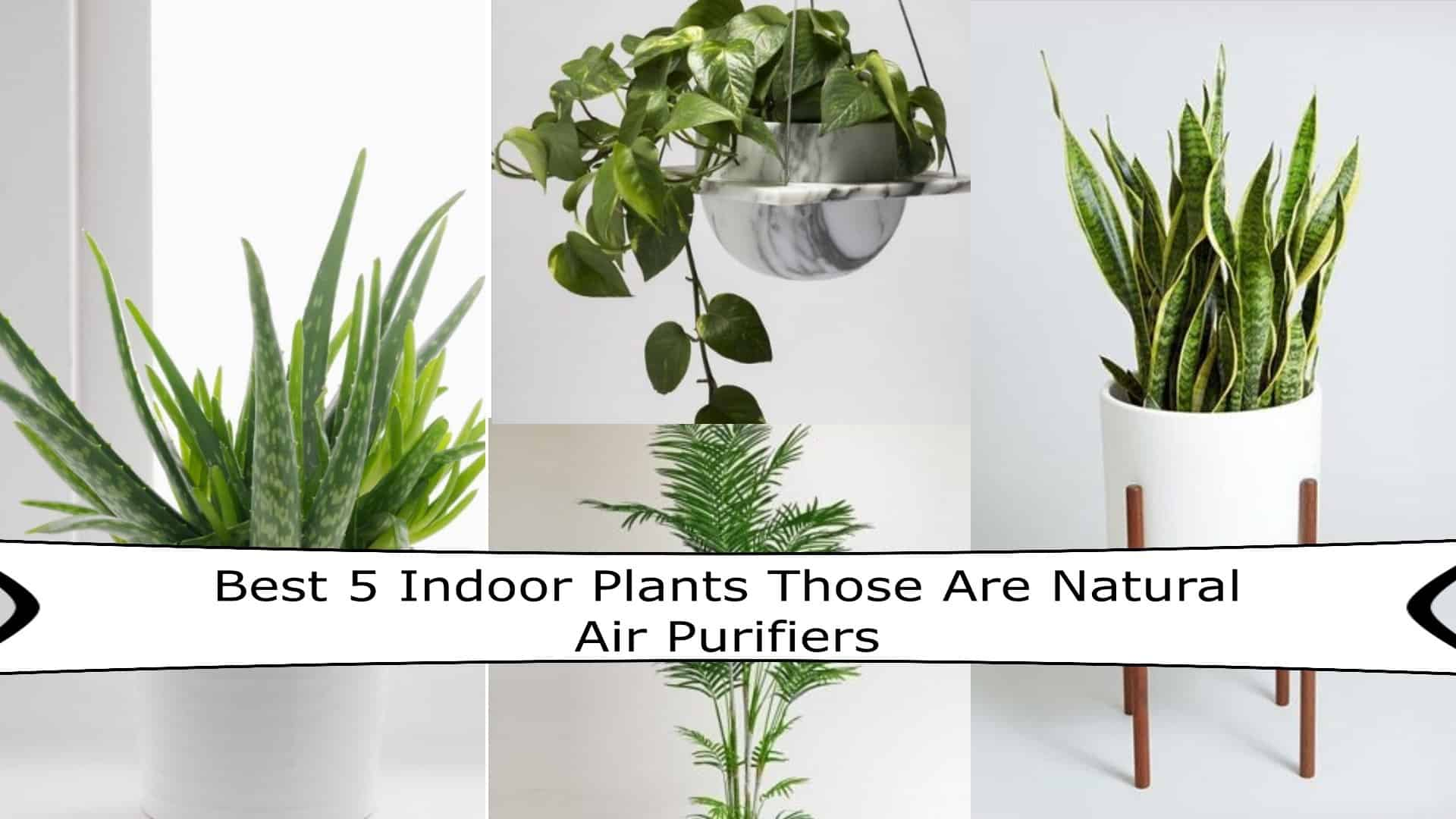 Best-5-Indoor-Plants-That-Works-As-Air-Purifiers