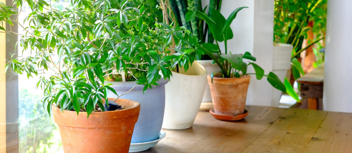 Plant-pot-displayed-in-the-window