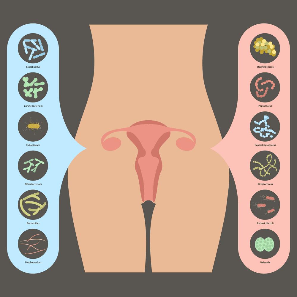 good-vaginal-bacteri-(1)